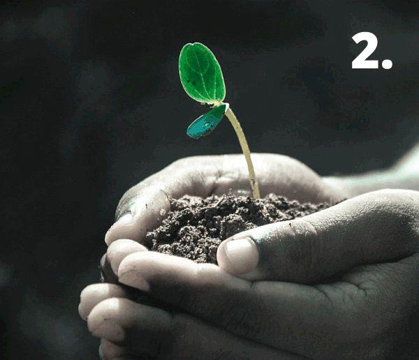 biljka-u-ruci2